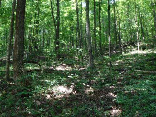 35 Ac Totally Wooded, Great Hunting : Livingston : Overton County : Tennessee