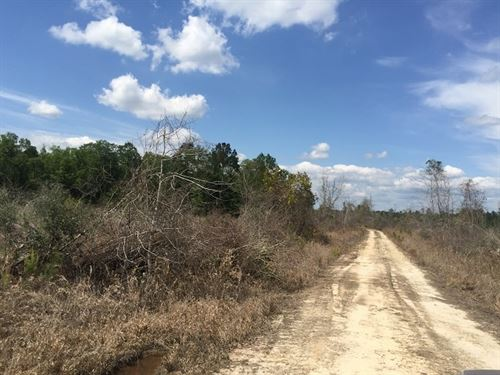 80.46 Acres in Poplarville, MS : Poplarville : Pearl River County : Mississippi
