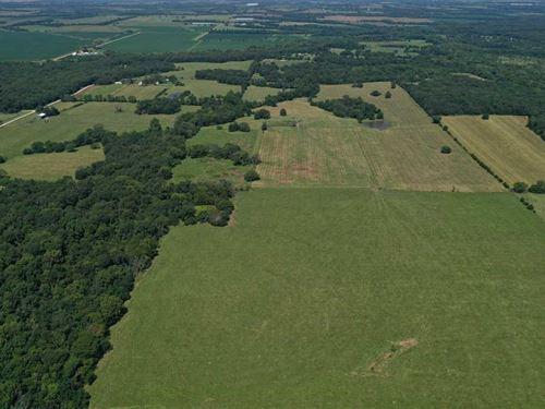 Pristine 170+///, Acre Cattle Farm : Green Ridge : Pettis County : Missouri