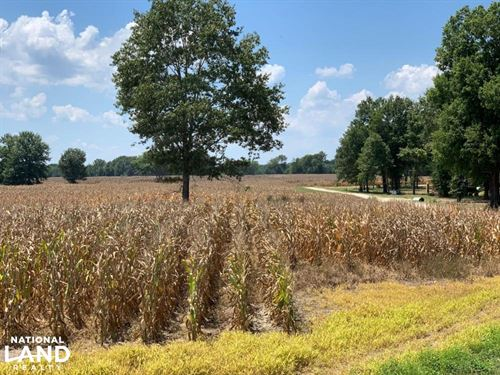 Farm/Residential Development Land : Brandon : Rankin County : Mississippi