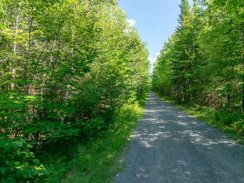 Recreational Timberland in Maine : Medford : Piscataquis County : Maine