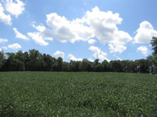22+ Acres, Barn, Creek, Spring : Lafayette : Macon County : Tennessee