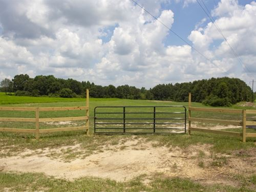 55 Acres In Pearl River County : Lumberton : Pearl River County : Mississippi