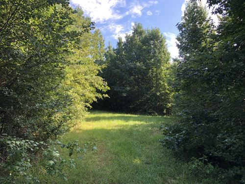 Good Hunting Land, Affordable Price : Camp Hill : Tallapoosa County : Alabama