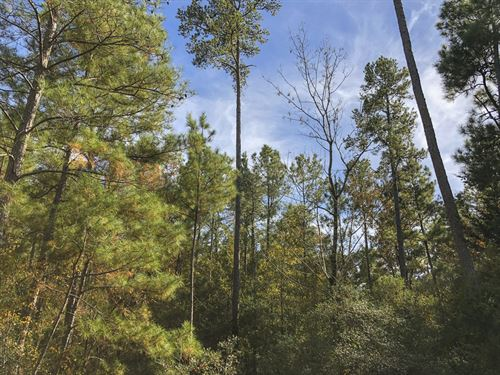 69 Ac Waterwood Estates Tr 13 : Huntsville : San Jacinto County : Texas