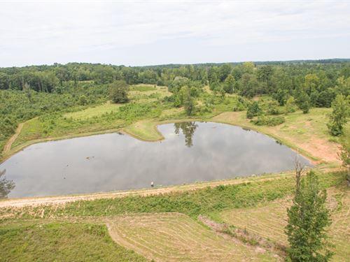 40 Acres +/- Tuscaloosa County, Al : Northport : Tuscaloosa County : Alabama