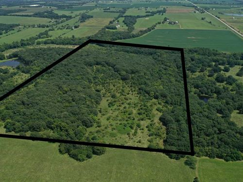 60+/, Acre Hunting Paradise : Green Ridge : Pettis County : Missouri