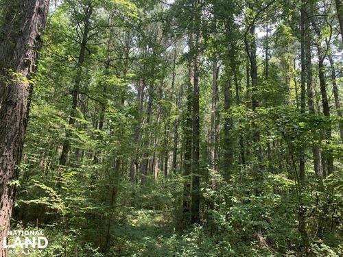 Deer Hunting in Creek Bottom : Bastrop : Morehouse Parish : Louisiana