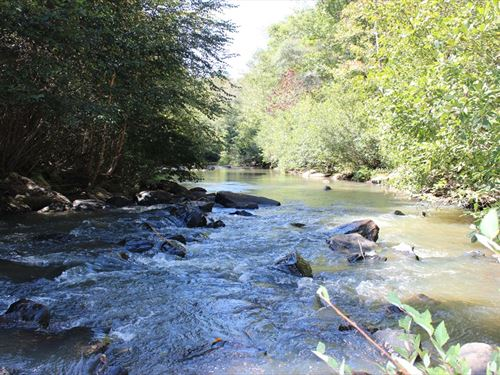 Big Water Frontage & Huge Hardwoods : Thomaston : Upson County : Georgia