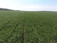 220 Acre Rice / Soybean Farm : Beedeville : Jackson County : Arkansas