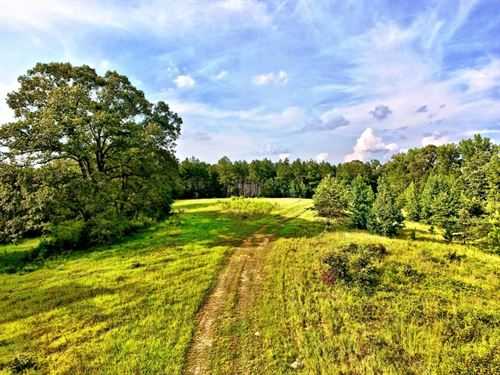 Recreational Timber Tract, 127 Acr : Sailes : Bienville Parish : Louisiana