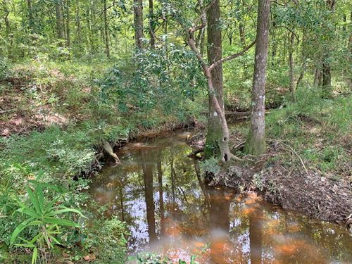 Bates Creek Tract : Citronelle : Washington County : Alabama