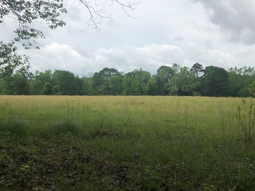 Beautiful Pasture Land For Sale : Bronson : Sabine County : Texas