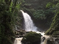 Coffee Farm, HI Yield, Waterfalls : San Ramon : Costa Rica