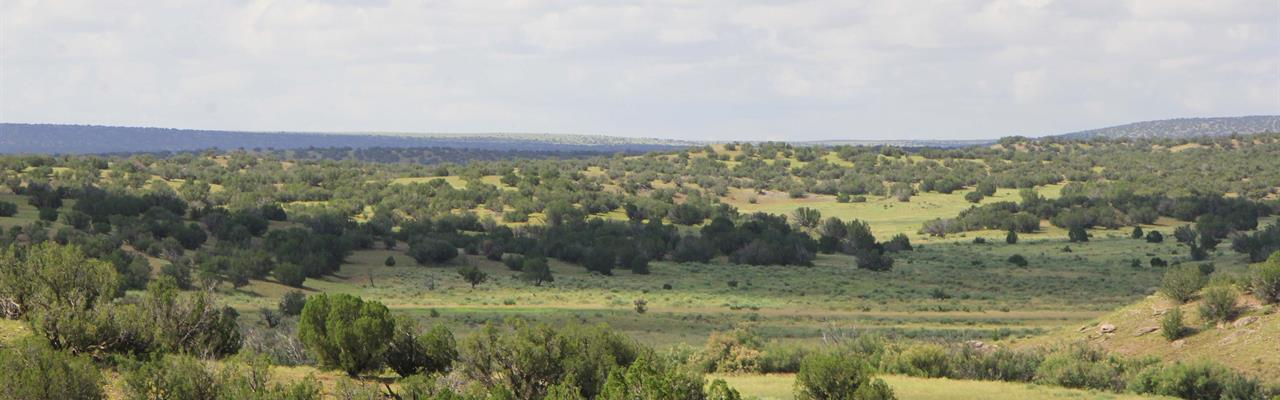 Ranches for Sale : $25,000 - $50,000 : RANCHFLIP