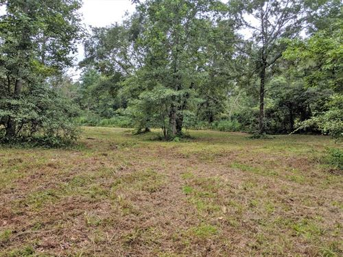 Denny's Creek Property : Eufaula : Henry County : Alabama