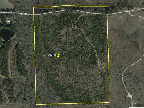 75 Acres Recently Replanted : Atlanta : Cass County : Texas