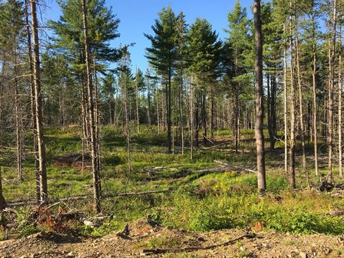 Recreational Timberland Exeter : Exeter Center : Penobscot County : Maine