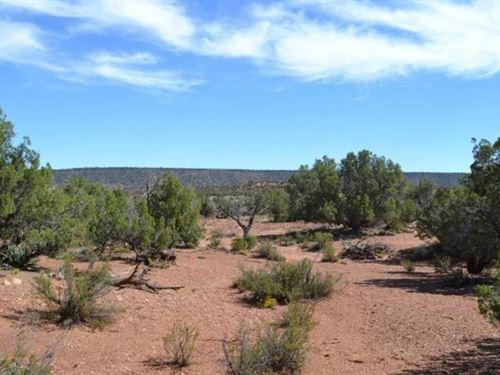 Covered In Junipers Snowflake Az : Snowflake : Navajo County : Arizona
