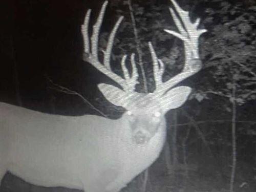 240 Acres of Hunting Land : Marshall : Searcy County : Arkansas