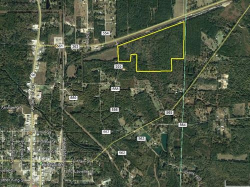 65 Acres Heavily Wooded Land : Kirbyville : Jasper County : Texas