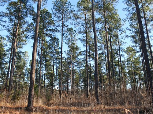 Quality Timberland Package : Ackerman : Choctaw County : Mississippi