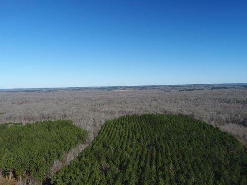 Beautiful Timberland Tract : Abbeville : Lafayette County : Mississippi
