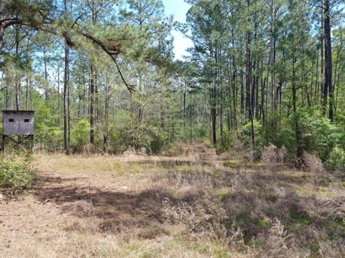 Rural Timbertract/Homesite : Vinegar Bend : Washington County : Alabama