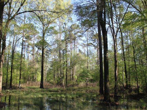 Clear Creek Tract : Monticello : Drew County : Arkansas