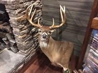 Turn Key Deer Processing Business : Americus : Sumter County : Georgia