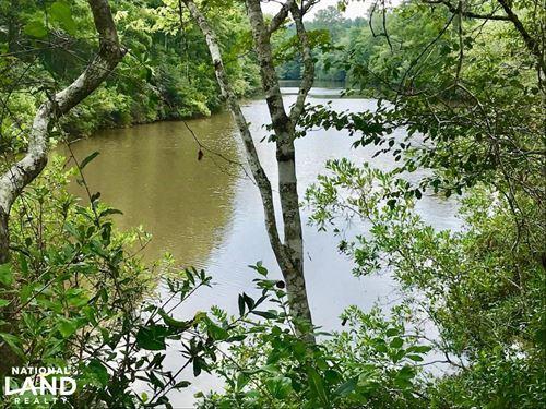 Patsaliga River Hunting & Timber : Red Level : Covington County : Alabama