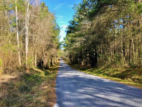 82 Acres Timberland Investment Prop : Seminary : Covington County : Mississippi