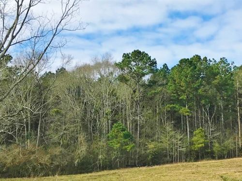 78 Acres Timberland Investment Prop : Seminary : Covington County : Mississippi