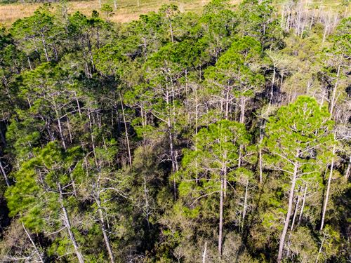 Timber Investment And Great Hunting : Monticello : Jefferson County : Florida