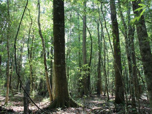 Ultra Convenient Hunting Land : Roxanna : Tallapoosa County : Alabama