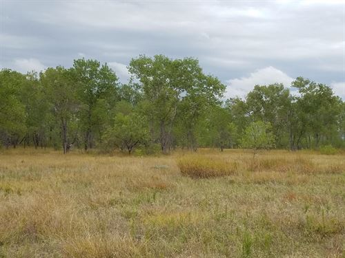 Cottonwood Ranch : Thalia : Foard County : Texas