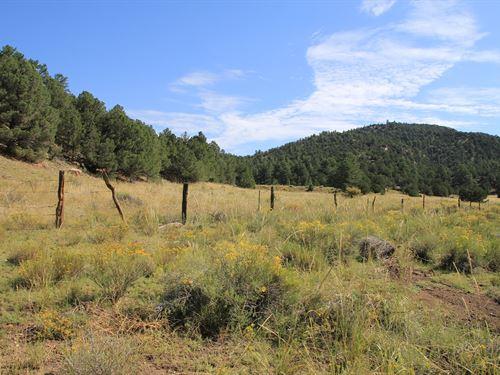 28+ Acres Custer County Westcliffe : Westcliffe : Custer County : Colorado