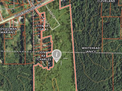 Great Tract For Cattle Or Home : Woodville : Wilkinson County : Mississippi