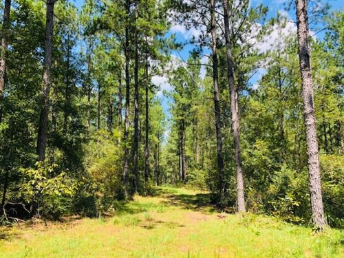 56 Acres / Gates Road / Columbia : Columbia : Marion County : Mississippi