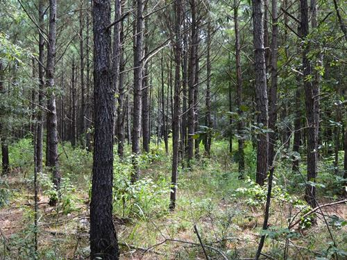 16.1 Acres Hunting And Timberland : Monticello : Lawrence County : Mississippi