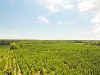 Timber Investment Near Deep Water : Darien : McIntosh County : Georgia