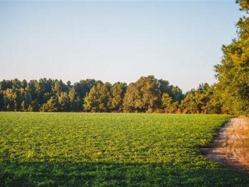 Mp Martin Tract 6 : Brooklet : Bulloch County : Georgia