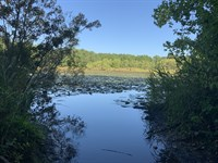 240 Acres On Ochlockonee River : Moultrie : Colquitt County : Georgia