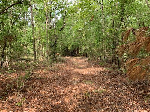 663Ac Holmes County Florida Hunting : Bonifay : Holmes County : Florida