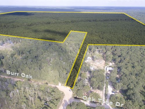 350 Acres Off Oak Forest Blvd : Cleveland : San Jacinto County : Texas
