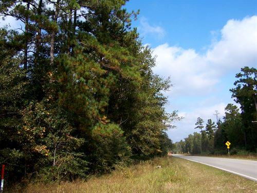 69 Ac Saratoga Timberlands Fm 787 : Saratoga : Hardin County : Texas