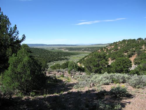 Trees And Great Views Are Waiting : Fort Garland : Costilla County : Colorado