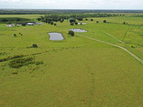 Hardee County Pomegranate Nursery : Zolfo Springs : Hardee County : Florida