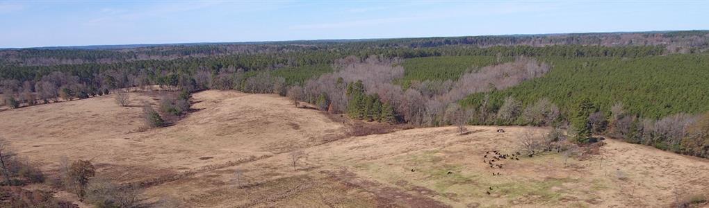 152.3 Ac, Pasture With Home Site : Ruston : Lincoln Parish : Louisiana