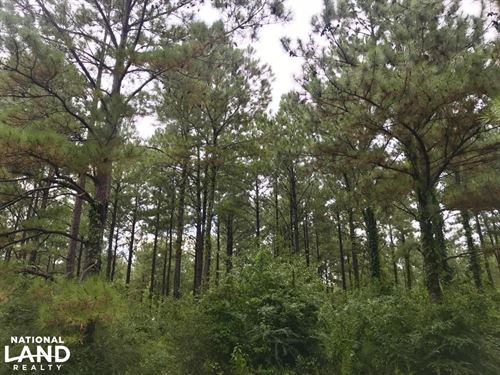 Highway 84 Homesite And Timber Trac : Red Level : Covington County : Alabama